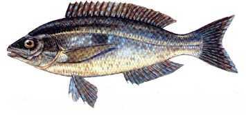 Photo of Türkiye'deki balık çeşitleri nelerdir?