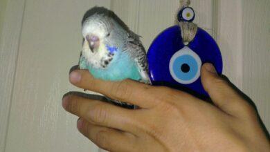 Photo of Muhabbetimiz Muhabbet Kuşları