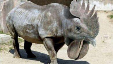 Photo of Hayvanlarla İlgili İlginç Bilgiler
