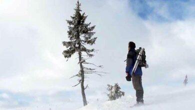 Photo of Dünyanın En Yaşlı Ağacı 9500 Yaşında!