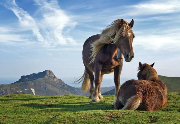 atlar-neden-ayakta-uyur İlginç Bilgiler Derlemesi 3