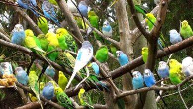 Photo of Muhabbet Kuşları Hakkında