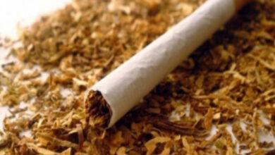 Photo of Nikotin Nedir ? , Vücudumuzdaki Nikotin Nasıl Temizlenir ?, Nikotini Temizleyen Besinler Nelerdir ?