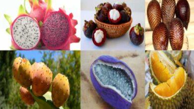 Photo of Kolay Kolay Bulamayacağınız Dünyanın 10 İlginç Meyveleri