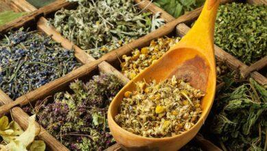 Photo of Bitki Çayları Ve Bu Çayların İnsan Sağlığına Etkileri