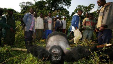 Photo of Kongo Cumhuriyeti'nde Görülmesi Gereken Yerler Nelerdir?