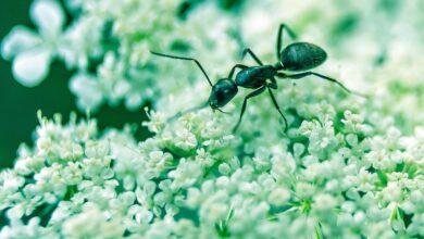 Photo of Çalışkan Karıncalar…