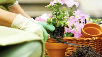 Photo of Evinizde Yetiştirebileceğiniz 11 Muhteşem Çiçek Türü