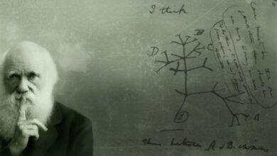 Photo of Biyolojik Türler Nasıl Ve Ne Şekilde Gelişti?