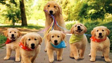 Photo of Köpek Sahipleneceklerin Bilmesi Gerekenler