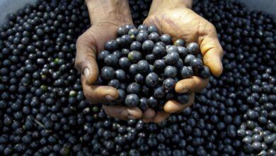 Photo of Acai Meyvesi Nedir? Faydaları Nelerdir?