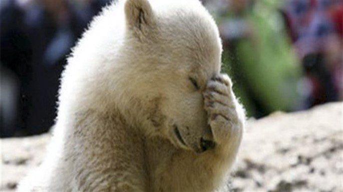 Kutup Ayıları Kendilerini Nasıl Gizler?