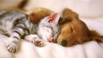 Photo of Kedi ve Köpekler Yıkanırken Dikkat Edilmesi Gereken Noktalar