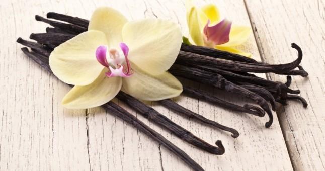 Vanilya Nedir? Özellikleri Nelerdir?