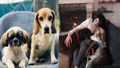 Photo of Tatile Giderken Evcil Hayvanlarınızı Güvenle Bırakabileceğiniz 6 Otel ve Pansiyon