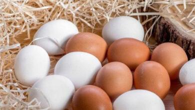 Photo of Yumurta Hakkında Doğru Bilinen 6 Yanlış Bilgi!