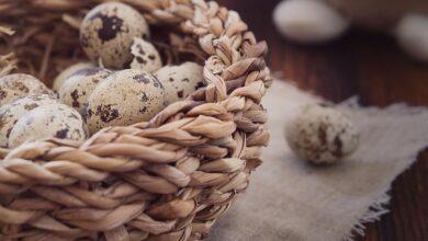 Photo of Bıldırcın Yumurtasının Faydaları