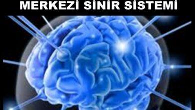OMURİLİK