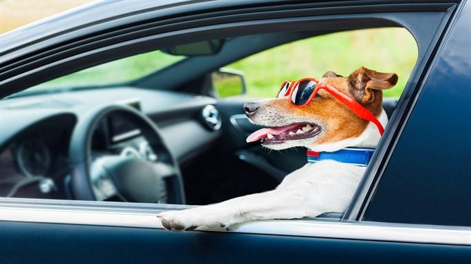 Evcil Hayvanlarınız İle Seyahat Etmenin 5 Püf Noktası Nedir?