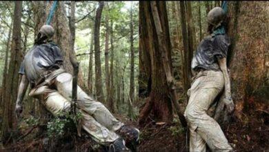 Photo of Japonya İntihar Ormanı