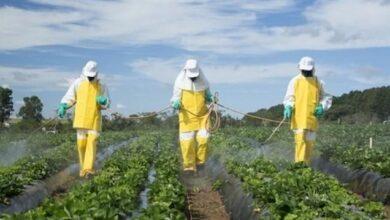 Photo of Pestisitler Nedir? Pestisit Çeşitleri Nelerdir?