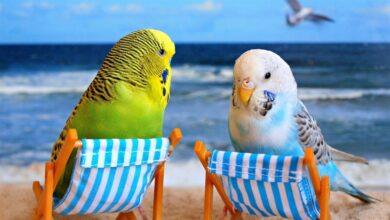Photo of Muhabbet Kuşu Bakımı Nasıl Olmalıdır?