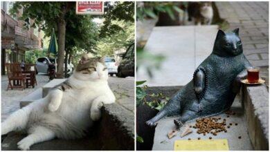 Photo of Farklı Hikayeleri İle Heykeli Dikilen 6 Güzel Hayvan