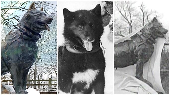 Farklı Hikayeleri İle Heykeli Dikilen 6 Güzel Hayvan