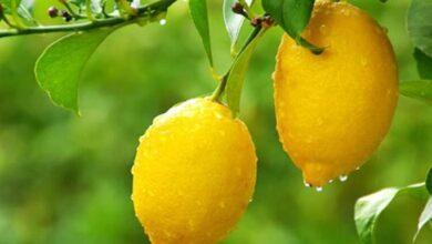 Photo of Limonun Güzellik Sırları Nelerdir?
