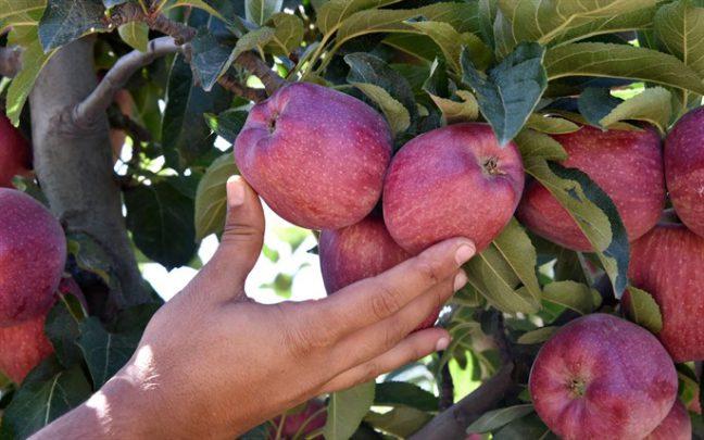Kış Aylarında Tüketilen 10 Sebze ve Meyve