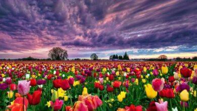 Photo of Mitolojik Hikayeleri Olan Çiçekler Nelerdir?