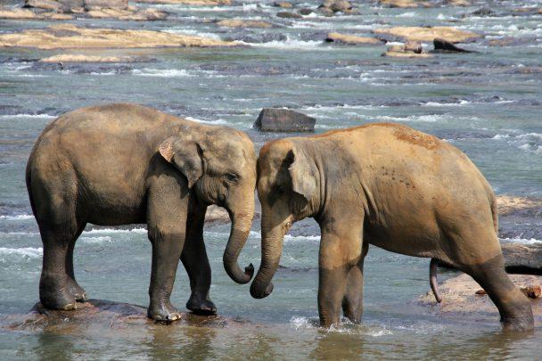 Sri Lanka gezi rehberi Fillerin Sırtında Gezilen Ülke: Sri Lanka Gezi Rehberi