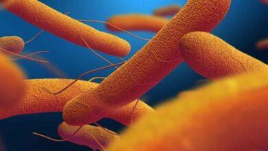 Photo of Tifo Hastalığı Nedir? Belirtileri Nelerdir?