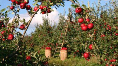 Dijital tarım pazarı (DİTAP) nedir?