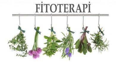 Photo of Fitoterapi Nedir?